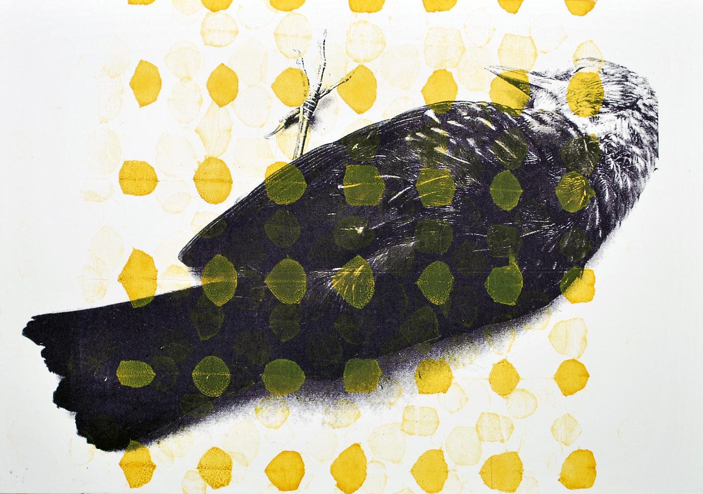 Serie Dode Vogels^ zeefdruk - 30x20cm